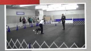 Fetty Obedience Debut