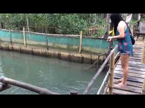 Bangus Culture at Bakhawan Eco Park Kalibo, Aklan