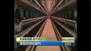 Modern egg laying farm in Fujian featured on Chinese TV.