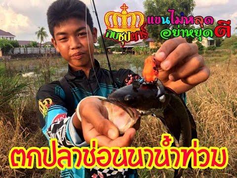 กบซุปตาร์ # ตกปลาช่อนนาน้ำท่วมข้างทาง BY Yod911