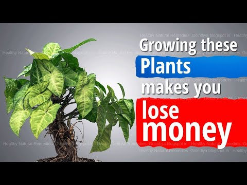 These Plants Bring Bad Luck, Poverty And Negative Energy In Life   Vastu Shastra, Feng Shui Tips