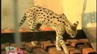 Nesta matéria o veterinário Gustavo nos apresentou seus animais de ...