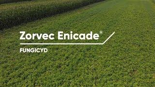 Zorvec Enicade® - najnowszy fungicyd do zwalczania zarazy ziemniaczanej