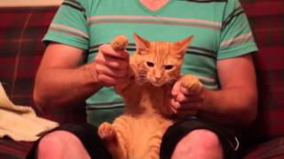 Dubstep Cat.mp4