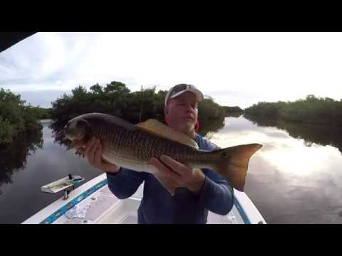 Secrets To Catching Red Fish Using Cut Bait With Captain Jim