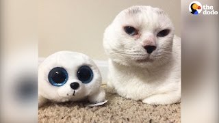 Cat Who Lost His Ears Finds The Best Mom
