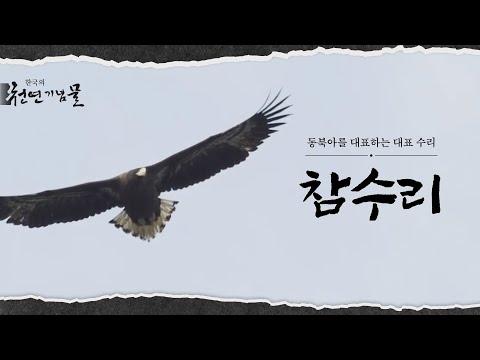 동북아를 대표하는 대형 수리 참수리