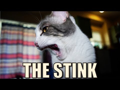 Talking Kitty Cat 62  - The Stink