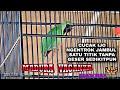 Cucak Ijo Jambul Ngentrok Ini Satu Titik Tanpa Geser Sedikitpun Madura Vaganza Sultan Akbar  Mp3 - Mp4 Download