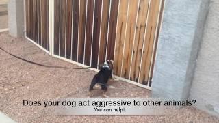 Scottsdale Dog Training, Behavior Problems