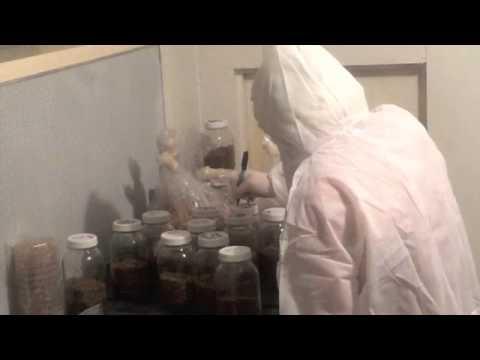 Production mycelium chez Violon et Champignon