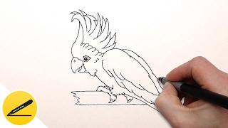 How to Draw a Parrot ★ Как Нарисовать Попугая ★ Como Dibujar un Loro