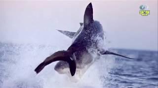 Как фотографируют акул? | Разрушительные акулы | Discovery Channel