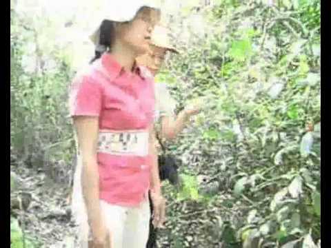 Hành trình đi tìm Ls Hoàng Văn Deo và LS Đỗ Phúc Việt