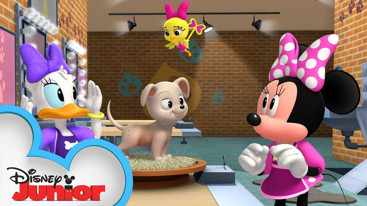 Minnie and Daisy are Pet Groomers 🐶| Mickey Mornings | Mickey Mouse Roadster Racers | Disney Junior