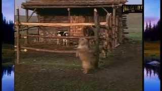 Les Hivers sans fin de la petite maison de la prairie (rare & inédit)