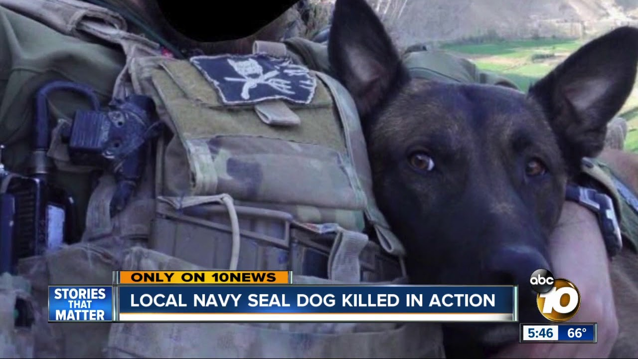 Local Navy Seal Dog Killed In Action Youtube