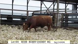 Lot 104 - REDR BERRY CHERRY 41G
