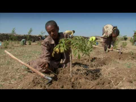How climate change is affecting Ethiopia