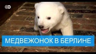 Родившийся в зоопарке Берлина медвежонок – мальчик
