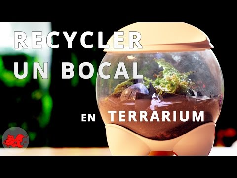 tuto recycler un bocal en terrarium humide youtube. Black Bedroom Furniture Sets. Home Design Ideas