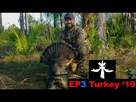 Florida Public Land Osceola Turkey Hunting - With Panther Sighting