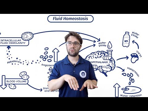 Hydration And Electrolytes | Why WATER Is So IMPORTANT | SBS Academy 2018