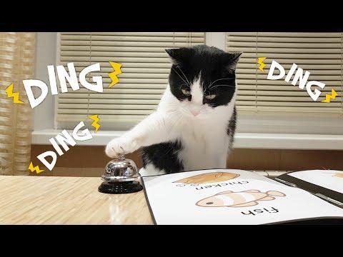 Waiter! Bring me food!