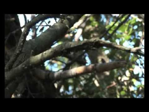 Vidéo repérage RBI - Leafprod