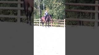 Horse for sale (Опричник, мерин Тракененской породы, 2012 г.р., 165 см/вх;)
