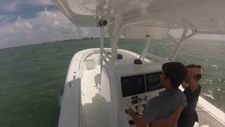 36 yellowfin running