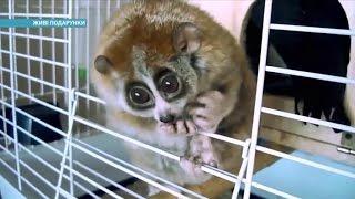 Почем украинцы покупают обезьян, енотов и кенгуру | Ранок з Україною