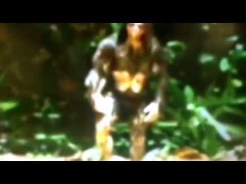 Hobitt grabado en 1977 isla flores indonesia por Dr Tim Dorrow