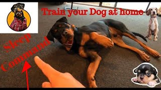 Dog showing all training skills | How to train your dog