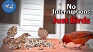 4. Cat TV 200+ Minutes of Closeup Birds feeding with Sound  NO ADs Interrupting