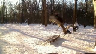 Turkeys Are Getting Jumpy