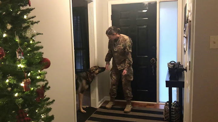Permanent Link to German Shepherd doesn't recognize returning soldier at first (a year away when still a pup)