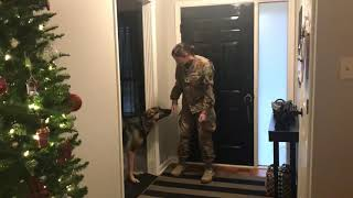 German Shepherd doesn't recognize returning soldier at first (a year away when still a pup)