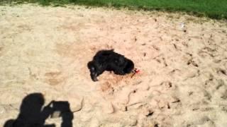 Taxi hat heute die Weitsprung Sandgrube entdeckt