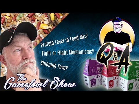 The Gamefowl Show: Q&A #2 - Protein Level In Feed Mix & More