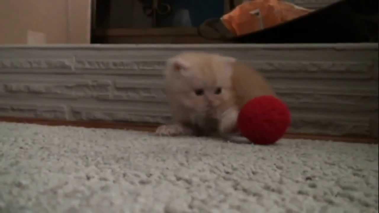 Маленький котенок играет с клубком - YouTube