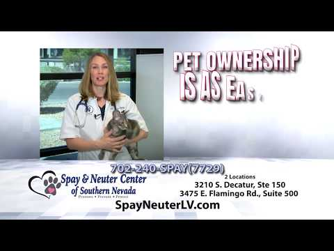Low-Cost Spay | Neuter | Vaccines in Las Vegas
