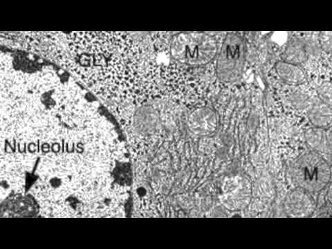 Free photo: Liver Cells Microscope View - Biology ... |Liver Cell Microscope