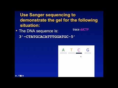 Sanger Sequencing Exercise