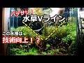 水草水槽 Vライン の動画、YouTube動画。