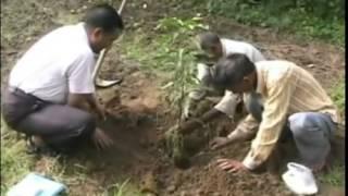 आम के नए बागों के रोपण के लिए अगस्त का महिना बहतर