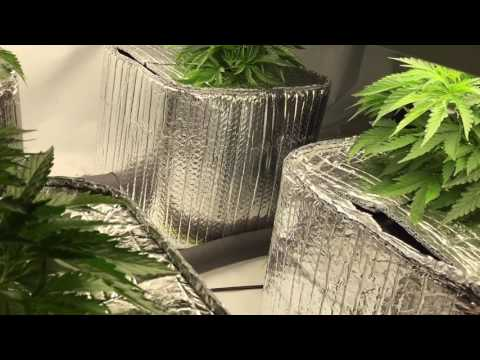 Week 1-2 (Veg.) Marijuana Grow using the Current Culture H2O System