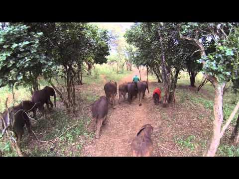 AN EARLY MAY MORNING - NAIROBI NURSERY
