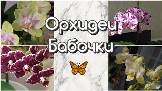 Орхидеи БАБОЧКИ в моей коллекции