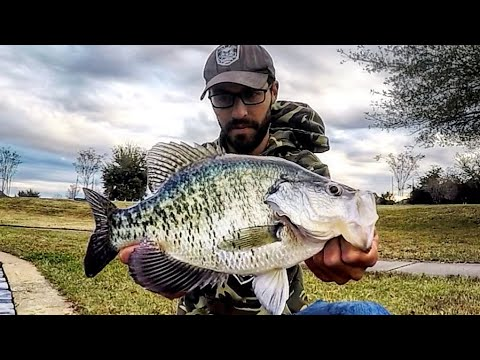 I CAUGHT The BIGGEST CRAPPIE I've Ever SEEN!